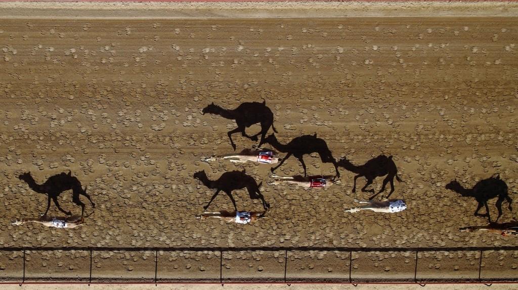 Трек Аль Мармун, верблюжьи бега, Дубаи, ОАЭ